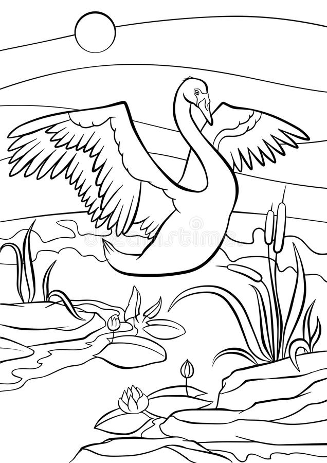 Coloring pages. Birds. Cute beautiful swan. royalty free illustration