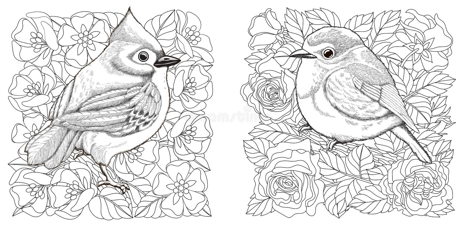 Coloring Pages With Birds And Flowers Stock Vector Illustration Of Flourish Birds 188317590