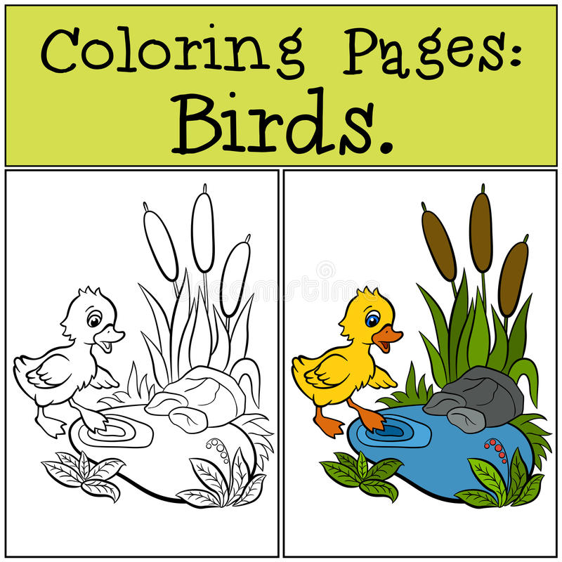 Download Coloring Pages Birds Little Cute Duckling Stock Vector