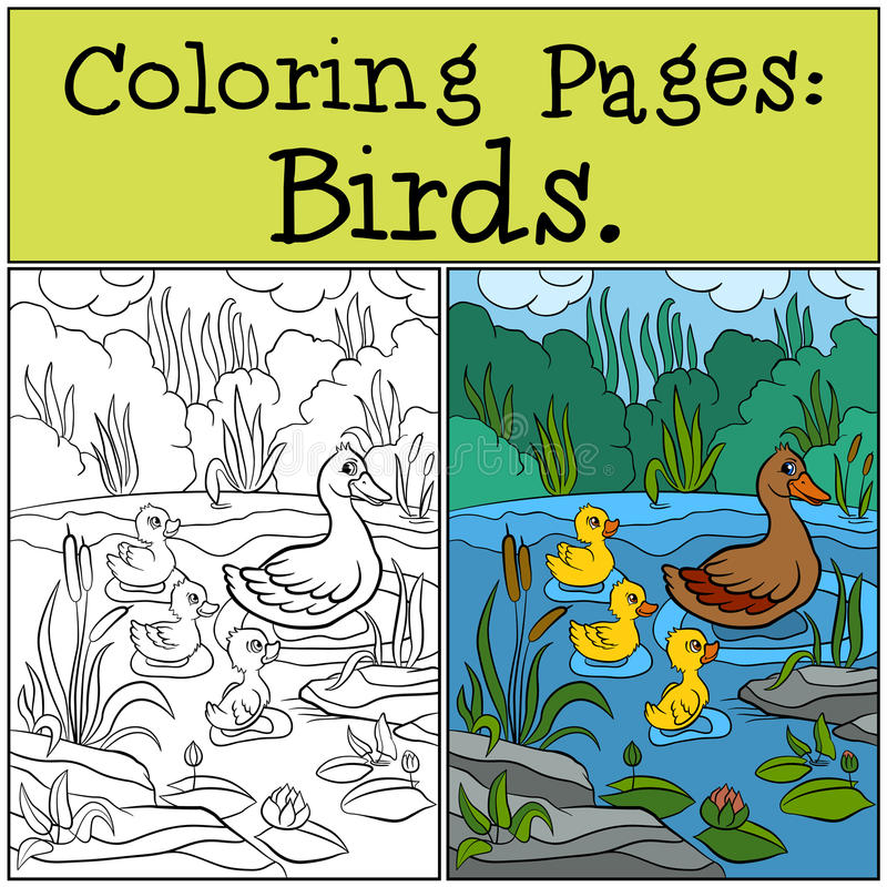 Free Coloring Pages: Birds. Mother Duck With Her Little Cute Ducklings. Royalty Free Stock Photo - 71205915