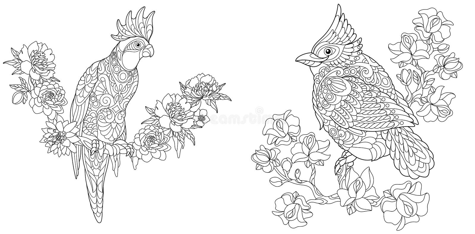 Coloring pages with cockatoo and cardinal. Coloring Pages. Coloring Book for adults. Colouring pictures with cockatoo and red cardinal bird. Antistress freehand royalty free illustration