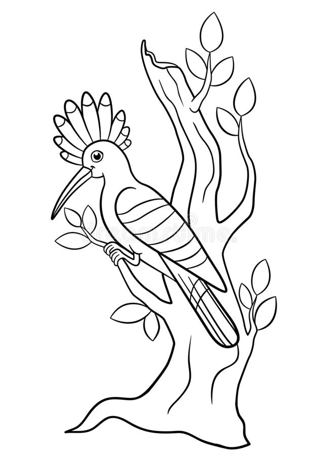 Coloring pages. Cute beautiful hoopoe sits on the tree branch stock illustration