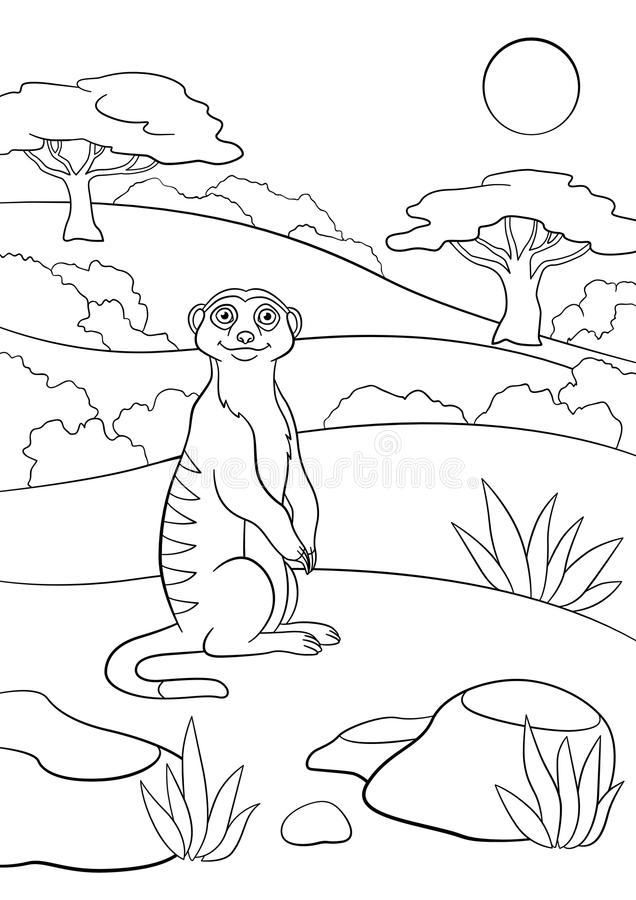 Coloring pages. Little cute meerkat smiles. Coloring pages. Little cute meerkat stands and smiles stock illustration