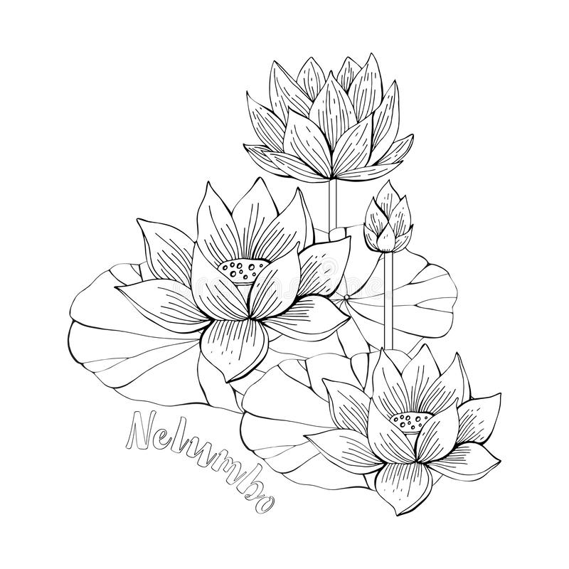 Coloring pages with Lotus flowers, zentangle illustrations for kids and adults coloring book or tattoos with high detail stock illustration