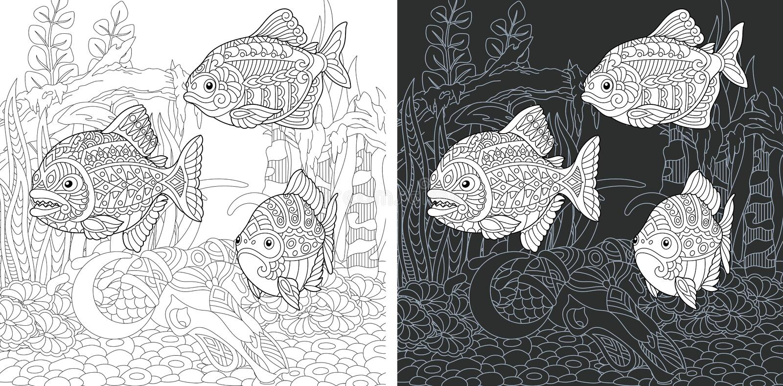 Coloring pages with Piranha Fish stock images