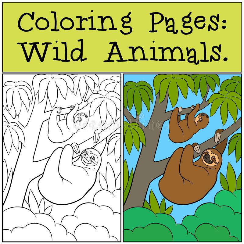 Coloring Pages: Wild Animals. Cute lazy sloth. Hangs on the tree branch and smiles vector illustration