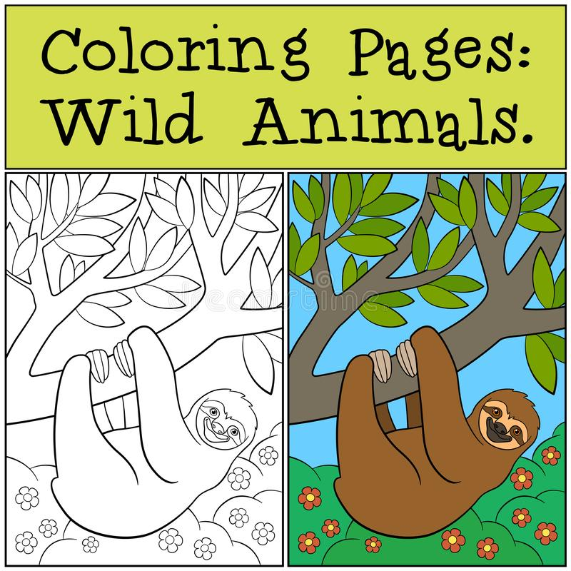 Coloring Pages: Wild Animals. Cute lazy sloth. Hangs on the tree branch and smiles royalty free illustration