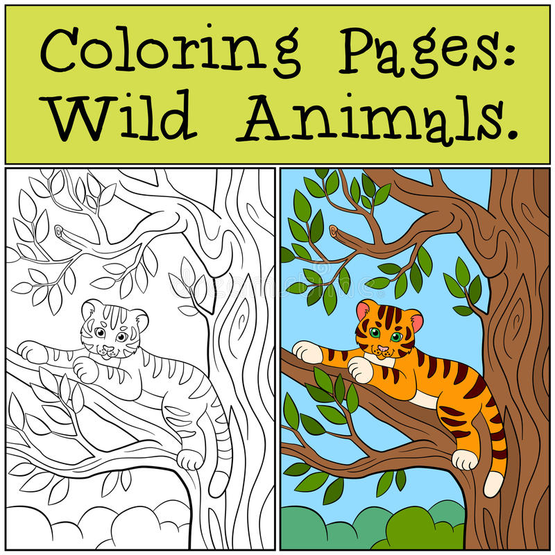 Coloring Pages: Wild Animals. Little cute baby tiger. Coloring Pages: Wild Animals. Little cute baby tiger lays in the tree branch and smiles royalty free illustration