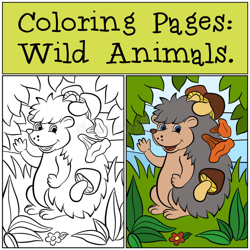 Coloring Pages: Wild Animals. Little cute hedgehog. Coloring Pages: Wild Animals. Little cute hedgehog has mushrooms in the needles vector illustration