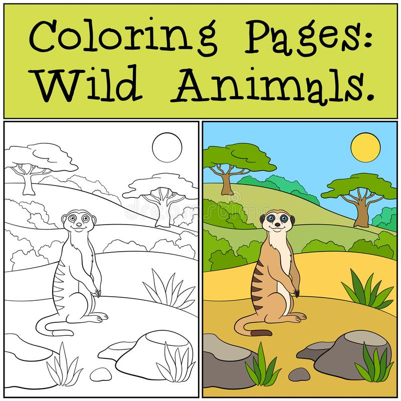 Coloring Pages: Wild Animals. Little cute meerkat smiles. Coloring Pages: Wild Animals. Little cute meerkat stands on the sand and smiles stock illustration