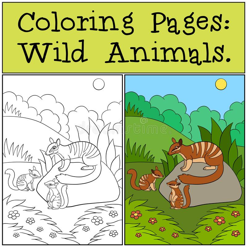Coloring Pages: Wild Animals. Little cute numbat on the log. Coloring Pages: Wild Animals. Mother numbat with her little cute babies vector illustration