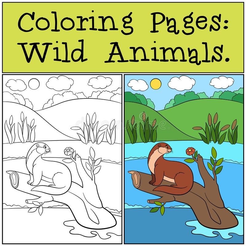 Coloring Pages: Wild Animals. Little cute otter smiles. Coloring Pages: Wild Animals. Little cute otter sits on the tree branch and smiles stock illustration