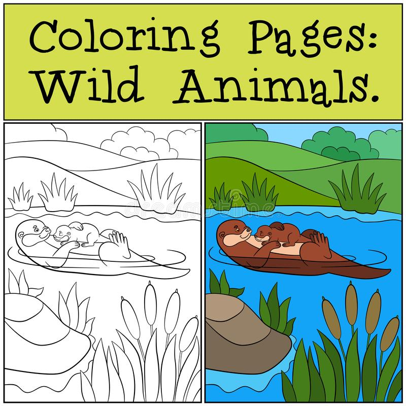 Coloring Pages: Wild Animals. Little cute otter smiles. Coloring Pages: Wild Animals. Mother otter swims with her little cute baby and smiles royalty free illustration