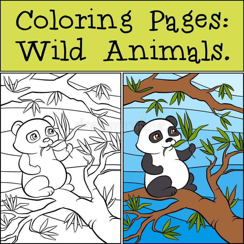 Coloring Pages: Wild Animals. Little cute panda. royalty free illustration