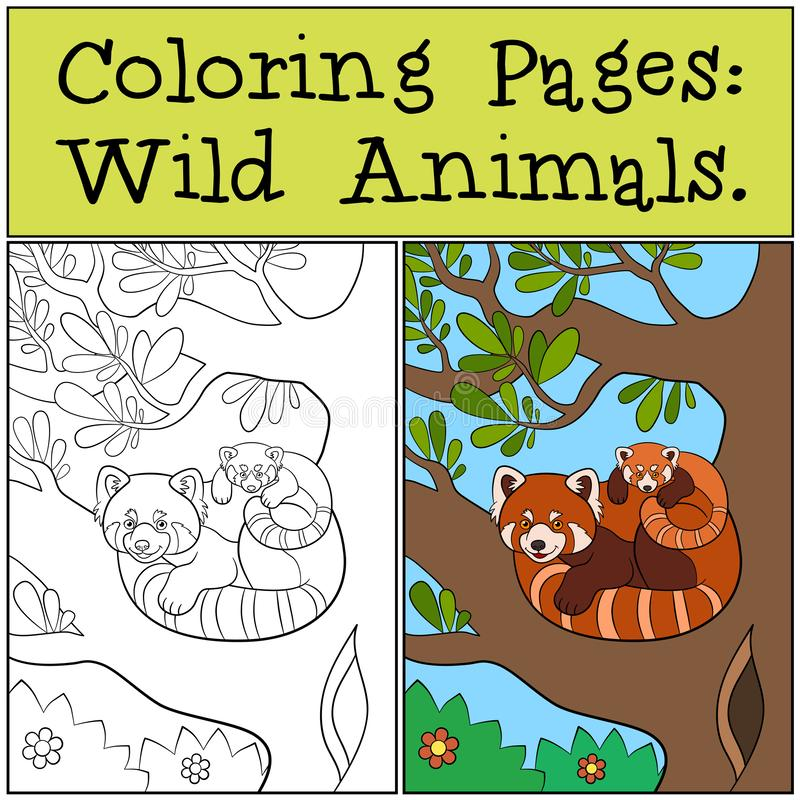 Coloring Pages: Wild Animals. Little cute red panda smiles. Coloring Pages: Wild Animals. Mother red panda sits on the tree branch with her little cute baby and royalty free illustration