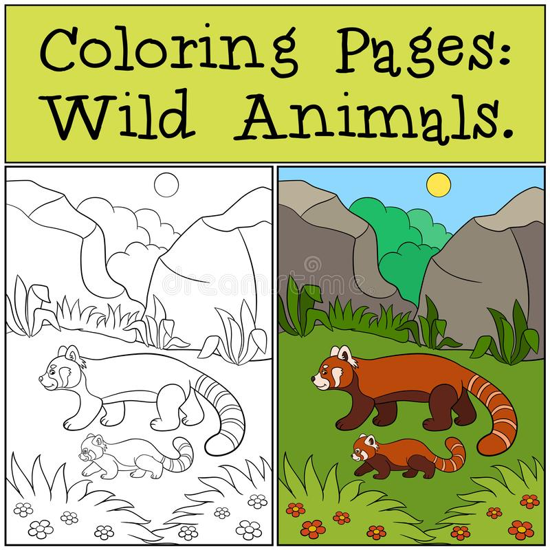 Coloring Pages: Wild Animals. Little cute red panda smiles. Coloring Pages: Wild Animals. Mother red panda walks with her little cute baby and smiles stock illustration