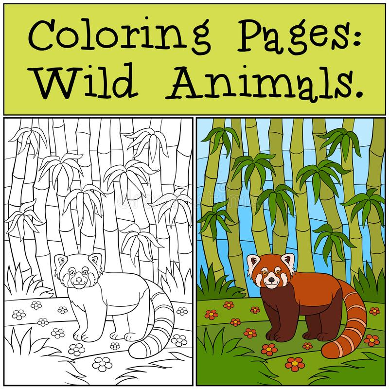 Coloring Pages: Wild Animals. Little cute red panda smiles. Coloring Pages: Wild Animals. Little cute red panda stands in the forest and smiles stock illustration