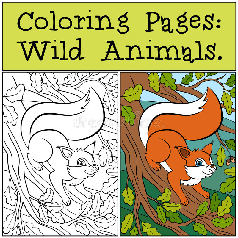 Free Coloring Pages: Wild Animals. Little Cute Squirrel . Royalty Free Stock Photography - 71206167