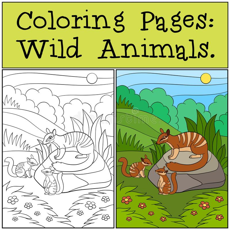 Coloring Pages: Wild Animals. Mother numbat with her babies. Coloring Pages: Wild Animals. Mother numbat with her little cute babies stock illustration