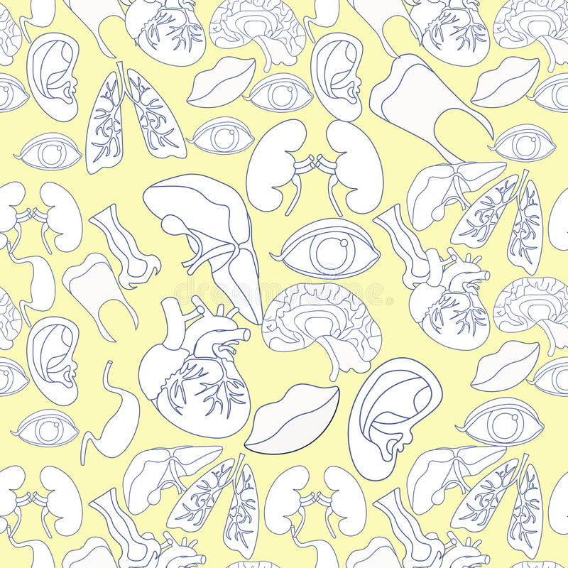 Coloring seamless pattern with human heart organ, lungs, brain, stock illustration