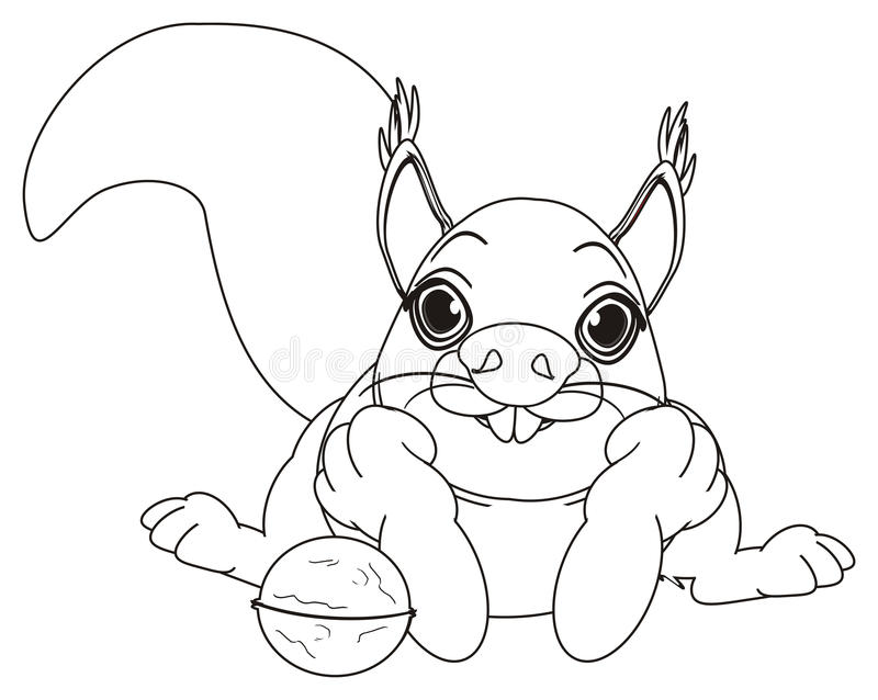 Coloring squirrel with a nut. Coloring happy squirrel lying with a round nut and watch vector illustration
