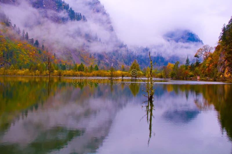 colorized树丛和湖 图库摄影