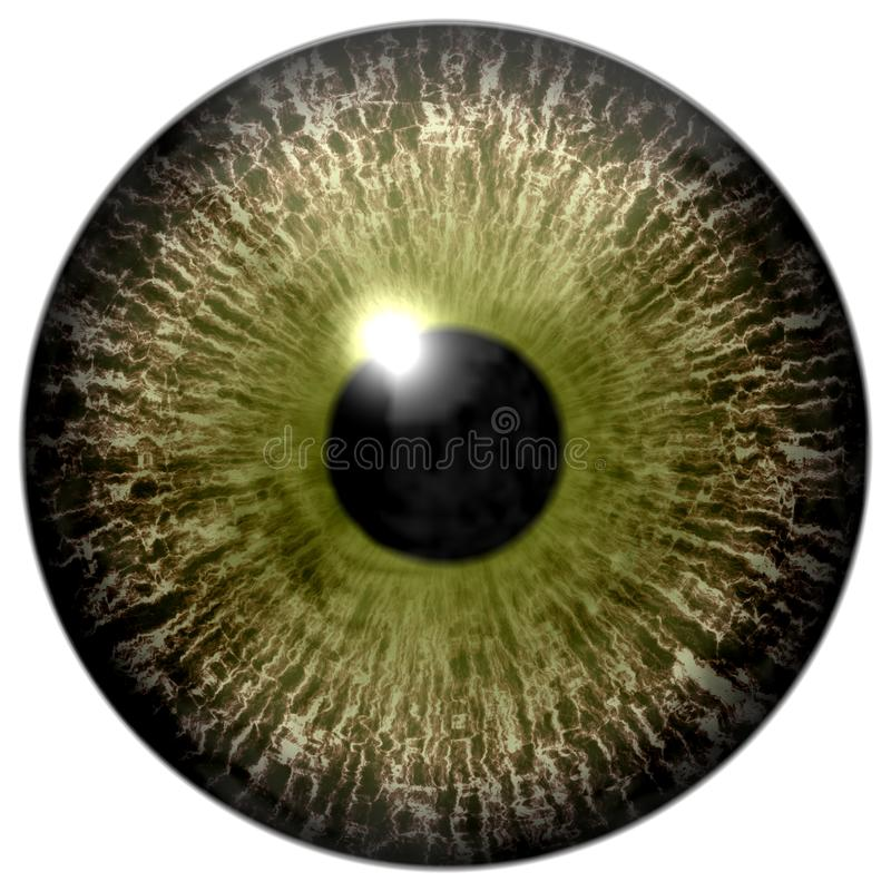 Colorized brown 3d human eyeball, isolated white background, black pupil.  vector illustration