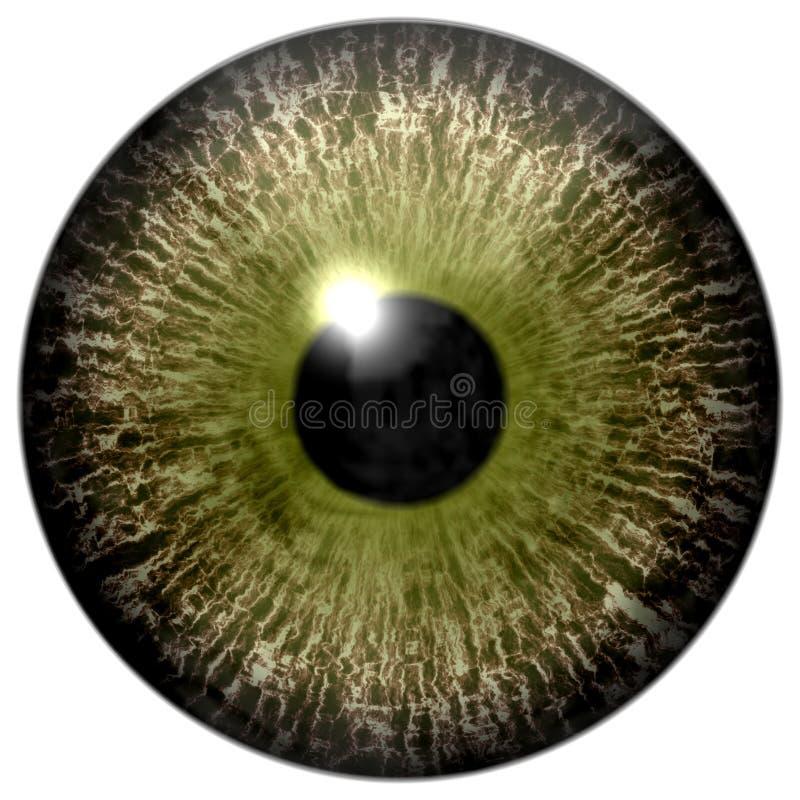 Colorized brunissent 3d le globe oculaire humain, fond blanc d'isolement, élève noir illustration de vecteur