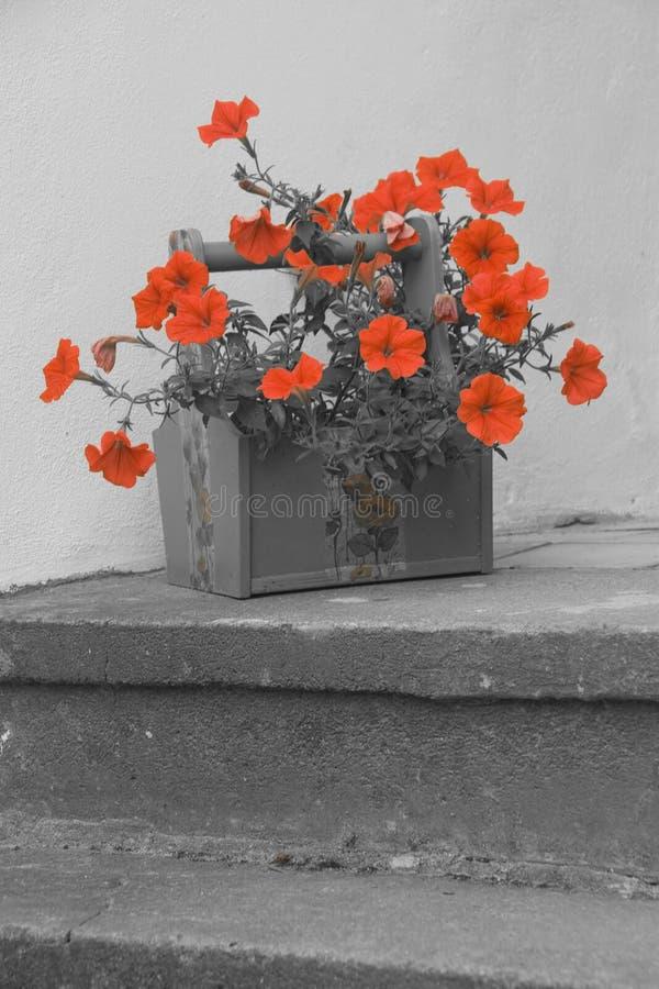 Colorized-Foto von roten Petunien stockbild