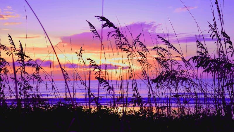 Colorized-Seehafer bei Sonnenaufgang lizenzfreies stockbild