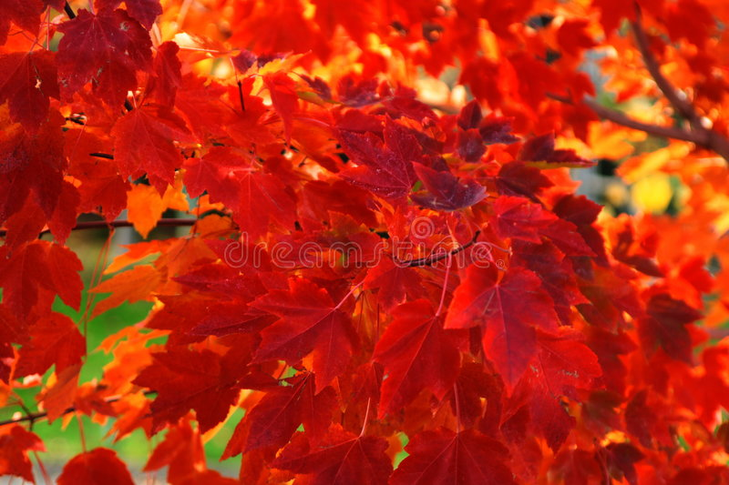 Download Colors stock image. Image of colorful, napa, outdoors, fall - 66801