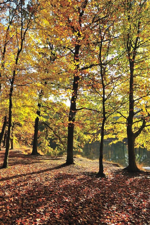 Colors in autumn
