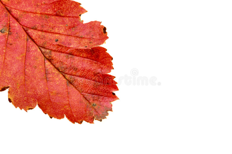 Colors Of Autumn #6 Royalty Free Stock Photo