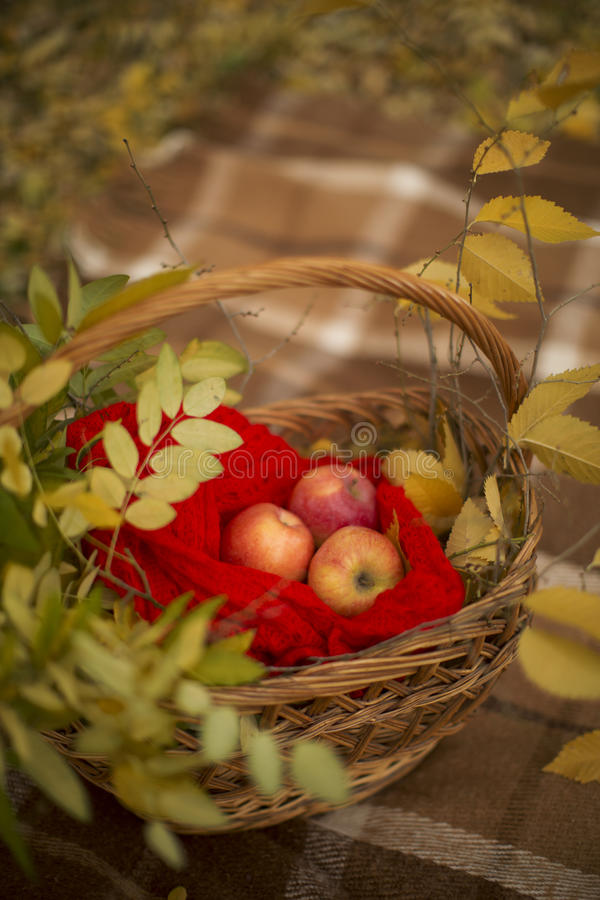 Colors of autumn royalty free stock photo