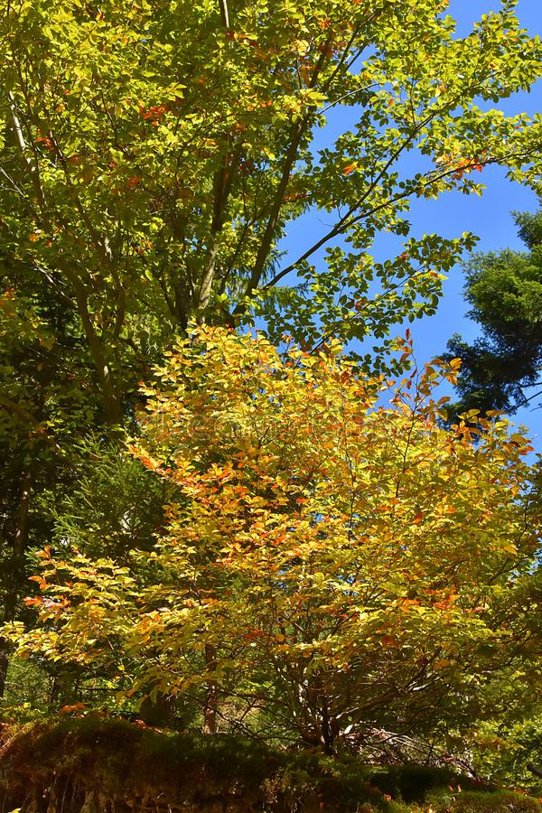 Download The Colors Of Autumn In Forest Stock Image - Image of colors, beautiful: 104356687