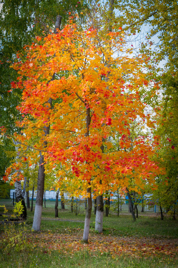Colors of autumn. Decorated with colorful paints autumn nature royalty free stock image