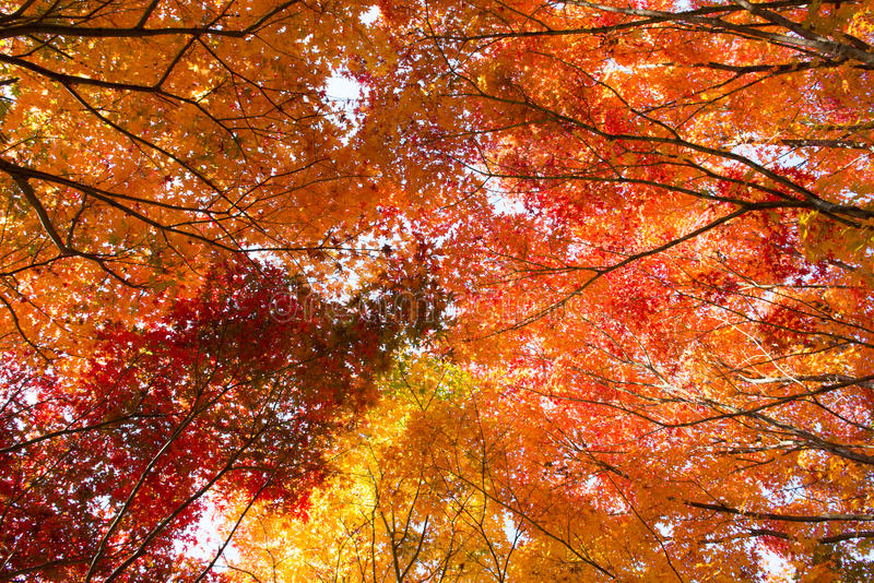 The colors of autumn royalty free stock photos