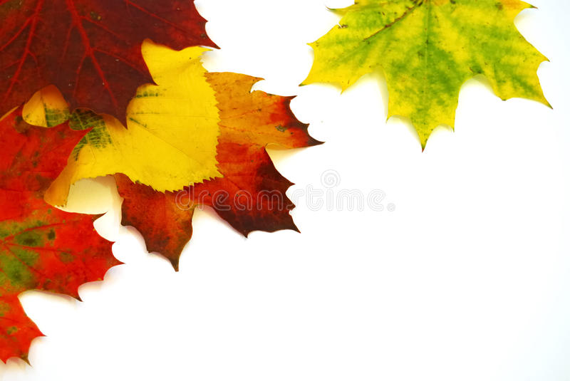 Download Colors of Autumn Leaves stock image. Image of frame, pattern - 21243229