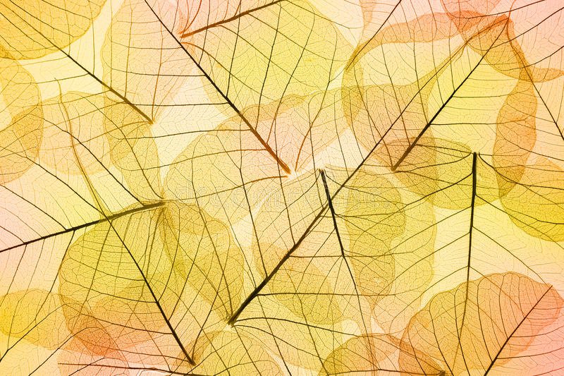 Colors of Autumn - Transparent Leaves Background. Colors of Autumn - Abstract transparent Leaves Background stock photo