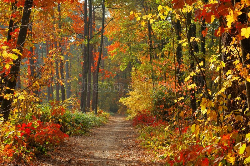 Colors Of Fall Stock Image