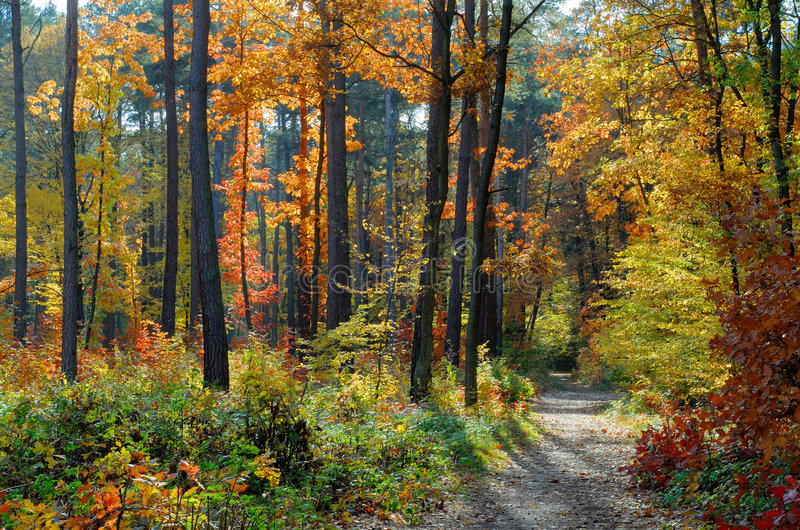 Colors of Fall royalty free stock photo