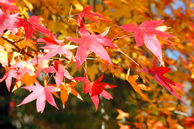 Colors Of Fall stock photography