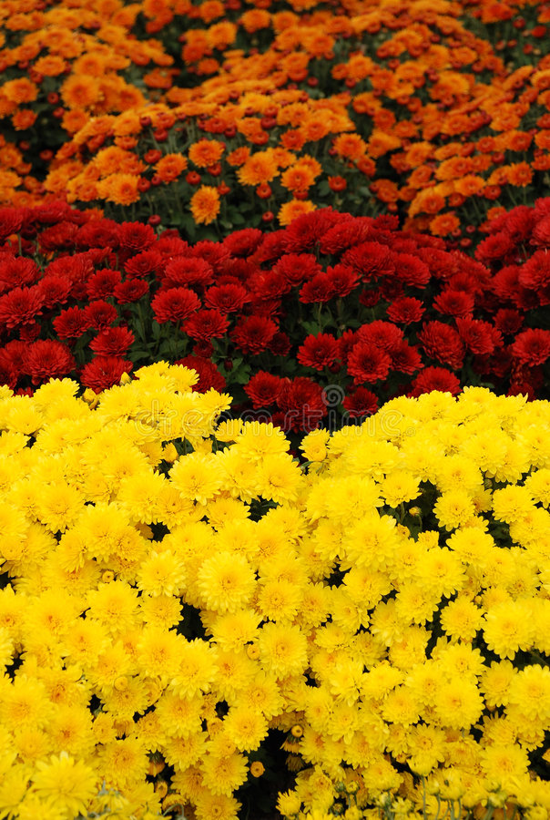 Colors of flowers. The beautiful colors of flowers royalty free stock image