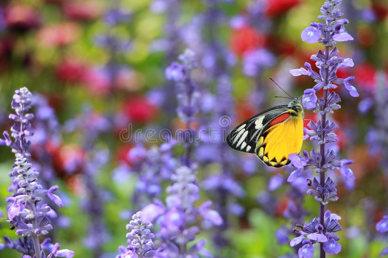 The colors of flowers and butterflie stock photo