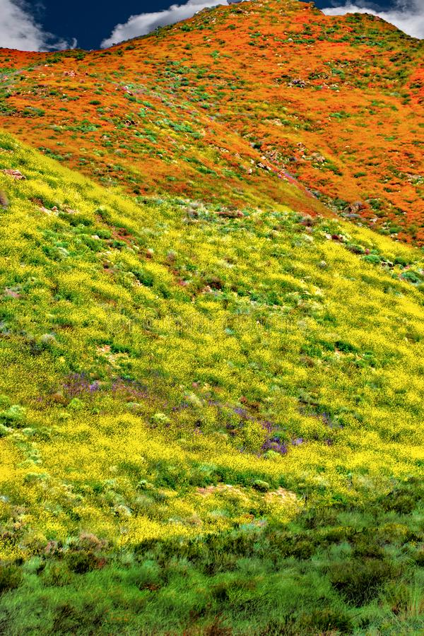 California Poppy fields landscape a picture of pastoral perfection. stock image