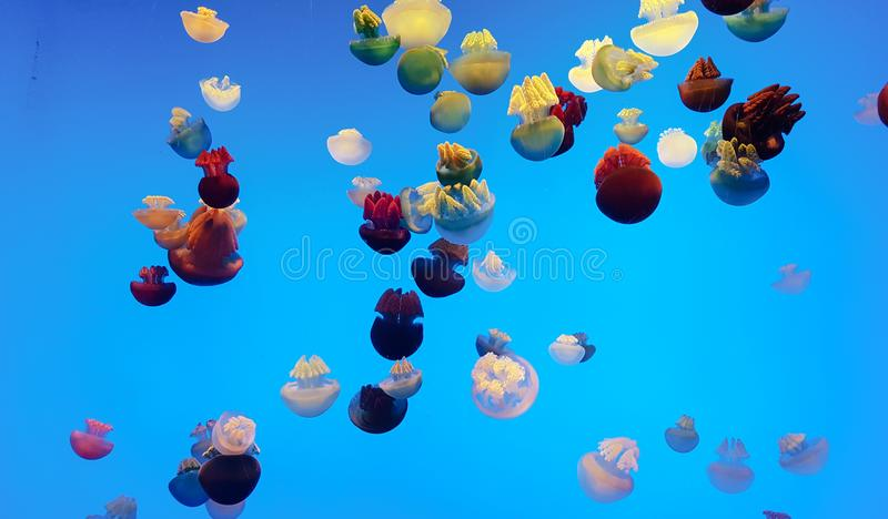 Colors jellyfish blubber. In deep water stock photos