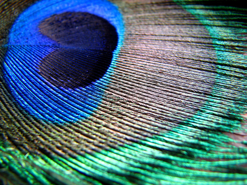 Colors n' Patterns. A beautiful macro background of a peacock feather texture stock photos