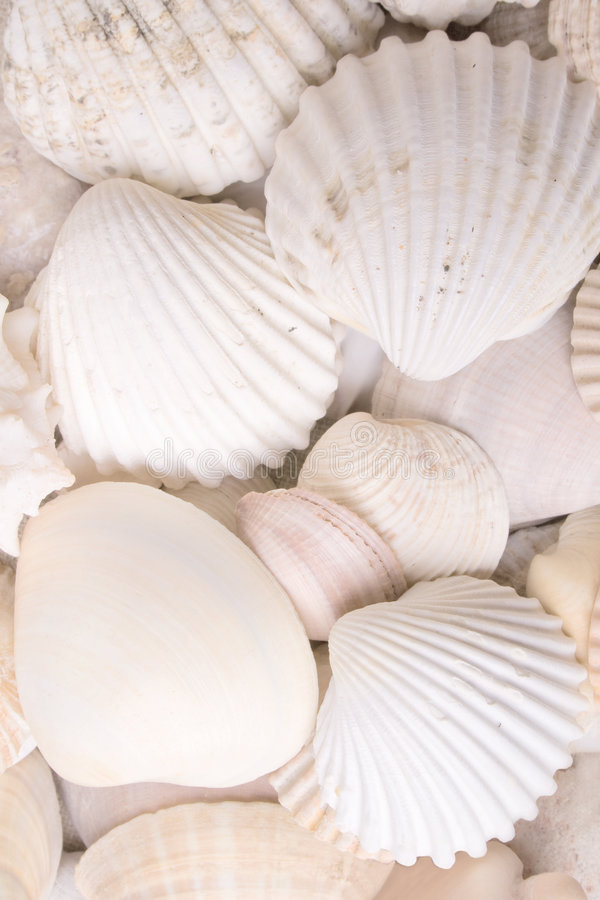 Download Colors of nature stock photo. Image of delicate, beach - 7312288