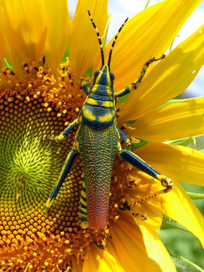 colors naturer fotografering för bildbyråer