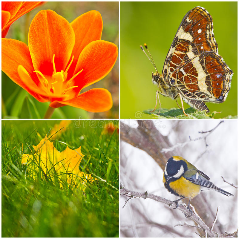 Free Colors Of The Seasons Stock Images - 30026104